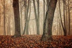 Autumn park in the fog - autumn misty landscape Royalty Free Stock Image