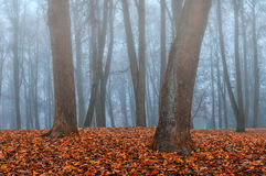 Autumn park in the fog - autumn misty landscape. Foggy autumn gothic landscape - autumn bare trees in the deserted autumn park in dense fog. Mysterious autumn Stock Photos