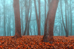 Autumn park in the fog - autumn misty landscape. Foggy autumn gothic landscape - autumn bare trees in the deserted autumn park in dense fog. Mysterious autumn Royalty Free Stock Photography