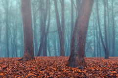 Autumn park in the fog - autumn misty landscape. Foggy autumn gothic landscape - autumn bare trees in the deserted autumn park in dense fog. Mysterious autumn Stock Photography