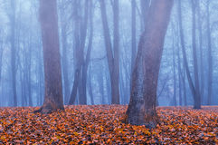Autumn park in the fog - autumn misty landscape Stock Photography