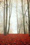 Autumn park in foggy weather - autumn colored landscape Stock Images