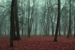 Autumn park in foggy weather - mysterious autumn landscape Stock Image