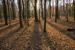 Autumn park, forest with sun rays beautiful landscape photo. Almost bare trees and colorful leaves on the ground. stock photos