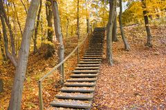 Free Autumn Park Forest Yellow Leaves Landscape, Stairs Royalty Free Stock Photography - 129554597