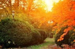 Autumn park, garden, Stock Images