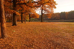 Autumn park. Gold leaves in the Autumn park with the lake. October Fall Stock Photo