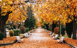 Autumn park with golden trees royalty free stock images