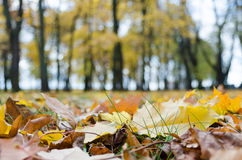 Autumn in the park. Grass and yellow leaves in the park Stock Photos