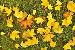 Autumn park ground with dry yellow orange maple leaves Royalty Free Stock Images