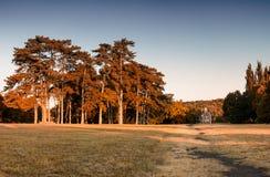 Autumn park. Group of big tree on autumn park Stock Photography