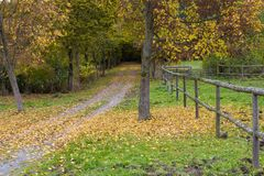 Autumn in the park. Hessenpark , Hesse, Germany. Autumn in the park. Alley of yellow deciduous trees, pedestrian road covered with fallen leaves. Hessenpark royalty free stock photo