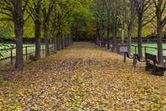 Autumn in the park. Hessenpark , Hesse, Germany. Autumn in the park. Alley of yellow deciduous trees, pedestrian road covered with fallen leaves. Hessenpark stock photography