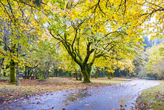 Autumn park with huge trees and a road Stock Photography