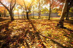 Autumn park in japan Royalty Free Stock Photography