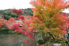 Autumn in the park in Japan royalty free stock image
