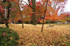 Autumn in the park in Japan stock photography