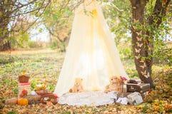 Autumn Park, jardin image libre de droits