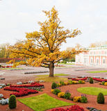 Autumn park Kadriorg, Tallinn Stock Images