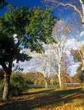 Autumn in the park. Royalty Free Stock Photos
