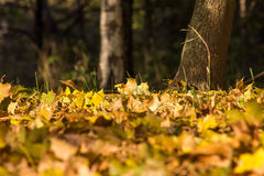 Autumn Park lövverk Royaltyfri Foto