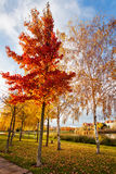 Autumn in the park lagoon Royalty Free Stock Photo