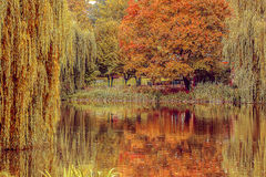 An autumn park with lake. Lietzensee in Berlin, Germany Stock Photos