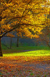 Autumn park landscape royalty free stock photography