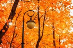 Autumn park landscape. Autumn trees and metal lantern on the background of yellowed autumn leaves. Autumn background. Golden autumn trees and park lantern Royalty Free Stock Photos