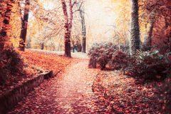 Autumn park landscape with path,trees, Beautiful foliage and sun shine, outdoor fall nature stock image