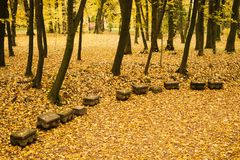 Autumn landscape in the park. Autumn in the park. Landscape with the road. Yellow maple leaves in October royalty free stock photography