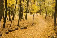 Autumn landscape in the park. Autumn in the park. Landscape with the road. Yellow maple leaves in October royalty free stock image
