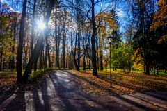 Autumn park landscape under the rays of the sun royalty free stock photography
