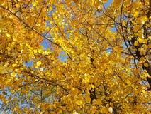 Autumn park yellow leaves sky Royalty Free Stock Photo