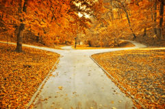 Autumn park lanes grunge photo Stock Images