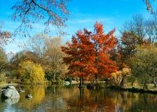 Autumn park lanscape Stock Photos