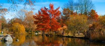 Autumn park lanscape Royalty Free Stock Photo