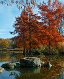 Autumn park lanscape Royalty Free Stock Images