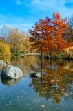Autumn park lanscape Stock Photo