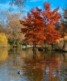 Autumn park lanscape Royalty Free Stock Photos