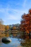 Autumn park lanscape Royalty Free Stock Image