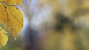 Autumn Park - le foglie gialle luminose emettono luce al sole video d archivio