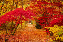 Free Autumn Park Leaf Red Golden Background . Royalty Free Stock Photography - 96608827