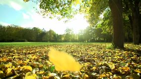 Autumn Park Leaves Slowly Fall to the Ground. Slowmotion stock video footage
