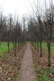 Autumn Park in Leninskiye Gorki Stock Photography