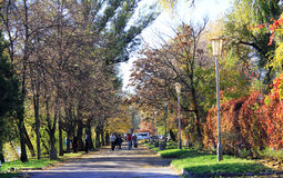 Autumn in the Park. Lights, colored leaves, walk people through the alleys of the Park of the town Stock Photography