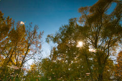 Autumn in the park, linden trees dropped leaves yellow.  Royalty Free Stock Images