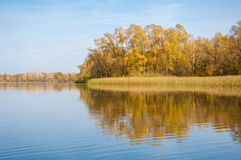 Autumn in the park, linden trees dropped leaves yellow.  Royalty Free Stock Photography
