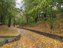 Autumn park line Stock Photos