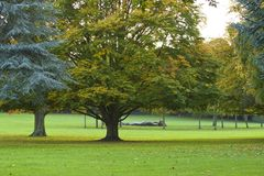 Autumn in the park, London Royalty Free Stock Image
